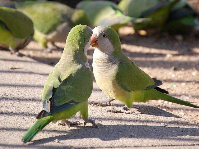 Parrots on sidewalk