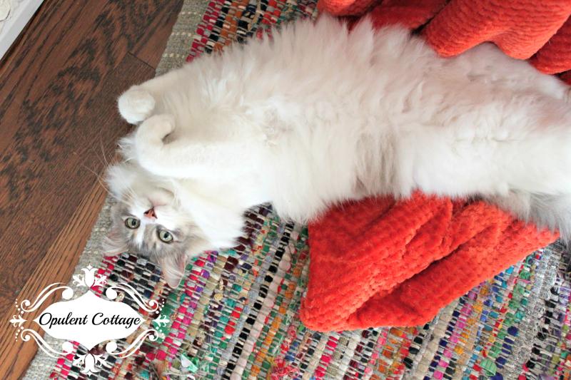 Opulent Cottage Kitty Charlotte2