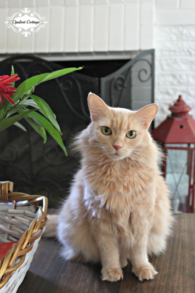 Opulent Cottage Our Cat Ginger