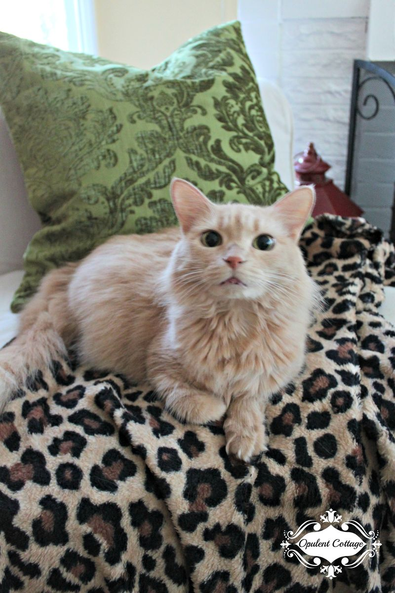 Opulent Cottage Ginger the Cat